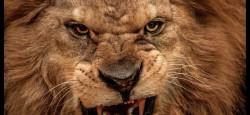 Arrogance, Aggression & Assertiveness